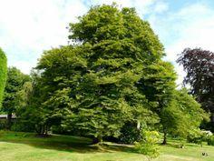 Tuinen van Devon | MijnAlbum - Fotoalbum Gratis Online! Mieke Löbker Chart's Edge Garden