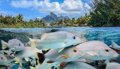 Photograph Bora Bora by John Harrison on Bora Bora Photos, John Harrison, Green Ocean, Sandy Beaches, Cool Photos, Tropical, Nature, Pictures, Animals