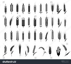 cereals icon set with rice wheat corn oats rye barley. ears of wheat bread symbols. organic agriculture seed plant and food natural eat. Wheat Drawing, Wheat Tattoo, Rice Plant, Rice Packaging, Plant Tattoo, Bar Logo, Agriculture Logo, Agriculture Machine, Tattoo Ideas