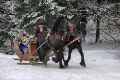 Romantic sleigh rides in the snoe