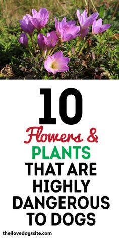 10 Flowers & Plants That Are HIGHLY DANGEROUS To Dogs