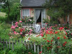 Flower Carpet roses mix beautifully with other perennials in this sweet cottage garden....just put it on the Bon Secour, and I am so ready to live there.