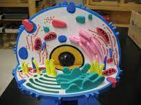 Resultado de imagem para celulas hechas de plastilina