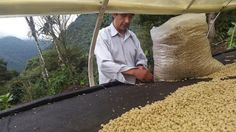 Can Coffee Farms Support Reforestation in Ecuador? Coffee Farm, Ecuador, Farms, Canning, Home Canning, The Farm, Homesteads, Farm Houses, Conservation