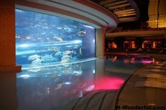 Wonderful_aquariums-ww (9)