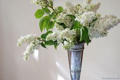 Flieder zum Muttertag; Mothers day with Syringa