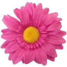 Image result for daisy flower