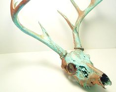 Deer Skull Taxidermy with Antlers Copper Natural Aqua Patina