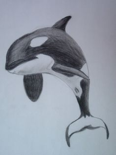 killer whale by orcaya on DeviantArt - killer whale by orcaya on - Animal Sketches, Art Drawings Sketches, Animal Drawings, Ocean Drawing, Whale Drawing, Orca Tattoo, Whale Tattoos, Killer Whale Tattoo, Killer Whales