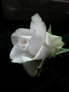 Sugar Rose by Christine Craig from La lavande cake boutiques