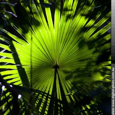 . Rainforests, Beautiful Forest, Plant Leaves, Tropical, Plants, Life, Tropical Rain Forest, Plant, Planets