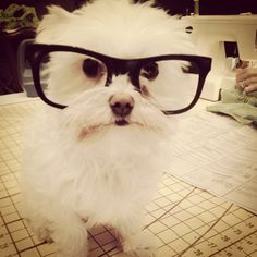 Cute hipster puppy