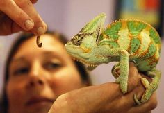 Exotic animals: Novel pets, or pests in an alien environment?
