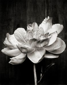 since peonies are really expensive in Mexico City, how good idea is having beautiful prints of peonies o my walls.