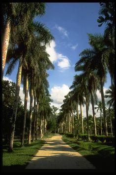 #espaciohonduras Parque Botánico Lancetilla