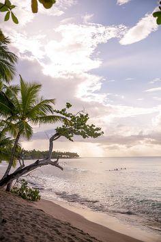 7 reasons to visit samana dominican republic