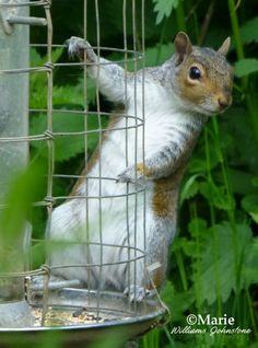 Squirrels look cute but can be destructive in a garden or yard rigged for bird watching. Use squirrel proof equipment where possible.
