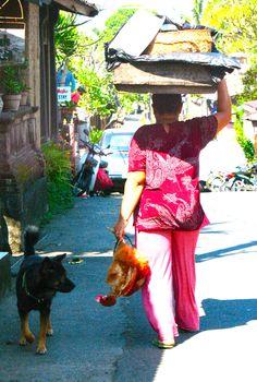 Bali. Dog meets chicken.