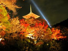 Light up Kyoto Ginkakuji, Leaves Changing Color, Japanese Culture, Wabi Sabi, New Pictures, Kyoto, Beautiful Images, Autumn Leaves, Asia