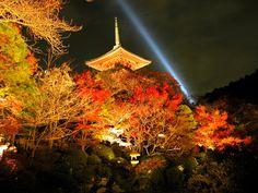 清水寺三重の塔ライトアップと紅葉 : 【京都】紅葉がキレイな秋に ...