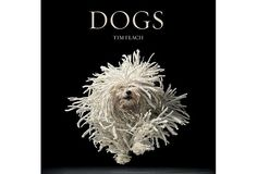 The cover apears to be a Havanese sporting a corded style.  LOVE it!