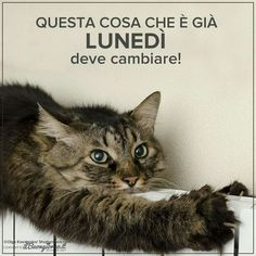 buongiorno lunedi Good Morning Good Night, Funny Moments, Animals And Pets, Dog Cat, Facebook, Frases, Happy Monday, Pictures, Cats