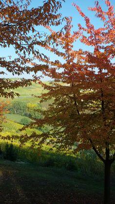 Autumn  in  Piedmont by  luigi  rabellino