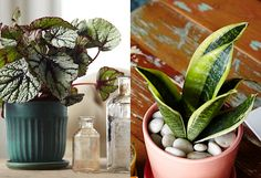 The Sill + Terrain: Choosing the Right Houseplant
