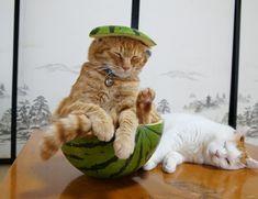 """Watermelon has a strange taste!"""