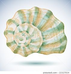 Watercolor sea shell. - Stock Illustration [22327014] - PIXTA