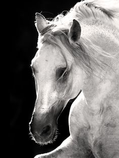 Stunning horse photography.