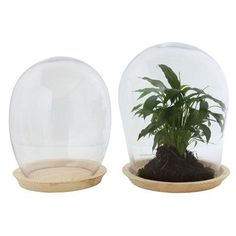 Creative Co-Op Secret Garden Glass Cloche