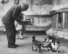 Igor Stravinsky and a few cats, Venice, 1956