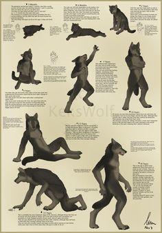 Werewolf - 9 Stages of Life by KeksWolf on DeviantArt