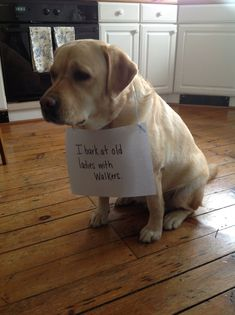 Dog shaming at its finest #puppyshaming