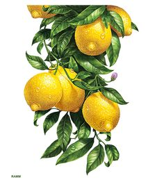 Error - - Error КУХОННЫЕ КАРТИНКИ news Watercolor Fruit, Fruit Painting, China Painting, Watercolor Paintings, Fruit Illustration, Food Illustrations, Botanical Drawings, Botanical Prints, Arte Sketchbook