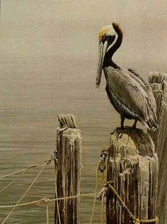 Artist/Naturalist ROBERT BATEMAN (Canadian: 1930)   Painting... Brown Pelican