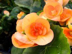 10 piante per un balcone all'ombra