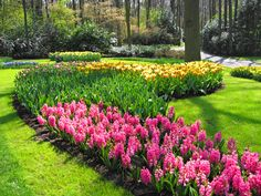 Flower Gardening | flowers for your garden Good Flowers To Start With For A Novice ...