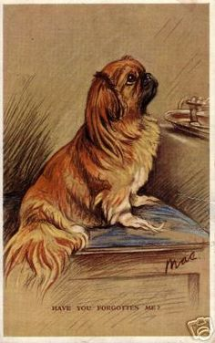 Little Pekingese Did You Forget Me Card Pekingese Puppies, Dogs And Puppies, I Love Dogs, Cute Dogs, Animals And Pets, Cute Animals, Lion Dog, Dog Paintings, Dog Art