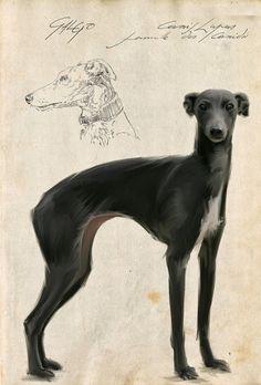 Galgo by Tanguy Flameng Greyhound Art, Italian Greyhound, Beautiful Dogs, Animals Beautiful, Hounds Of Love, Pharaoh Hound, Guache, Grey Hound Dog, Dog Paintings