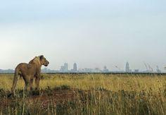 Nature vs. urban development