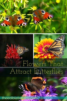 From Monarchs to Swallowtails, we all love to see butterflies hanging out in our yards. Luckily, there are plenty of flowers that attract butterflies! via @edibleterrace