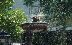 Bildresultat för bird bathing