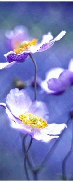 Tweeklank bloemen: paars en geel