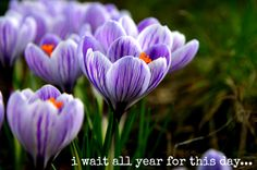 Some words about Spring and grief and keeping your heart open.