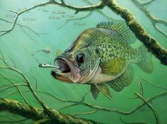 crappie pictures art | Great Crappie Print... | Crappie Fishing | Texas Fishing Forum