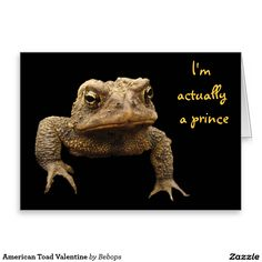 American Toad Valentine Greeting Card
