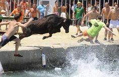 A bull charges man ©diego tuson Action Photography, Animal Photography, Cool Pictures, Cool Photos, Funny Pictures, Running Of The Bulls, Best Puns, Animal Attack, Dump A Day
