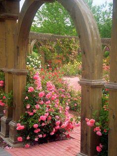Hermoso jardín de rosas: